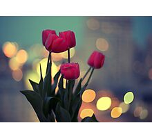 Tulips in twilight Photographic Print