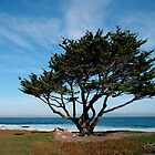"""Tree by the Sea"" by Gail Jones"