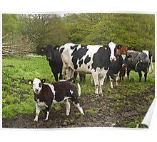 Happy Herd Poster