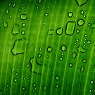 After rain by Pandrot