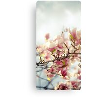 Evening Magnolia Canvas Print