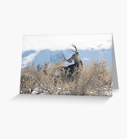 Lazy Sunday Afternoon Mule Deer Greeting Card