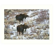Double Bull Moose Art Print