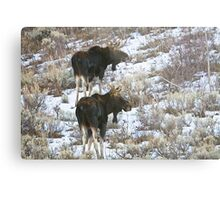 Double Bull Moose Metal Print