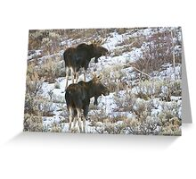 Double Bull Moose Greeting Card