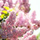 Lilac by Yuliya Art