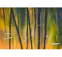 Beaver Pond Reflections 2 Photographic Print