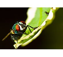 Portrait of a sleeping fly Photographic Print