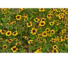 A field of flowers  Photographic Print