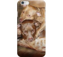 Pitbulls -  The Softer Side iPhone Case/Skin