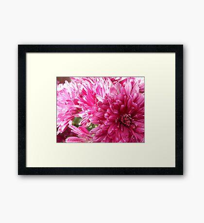 Pink Illusion Framed Print