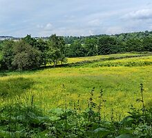 Buttercup Meadows by Colin Metcalf