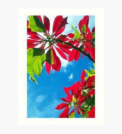 ~ Poinsettia ~ Art Print