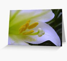 """Close To Lilly"" Greeting Card"