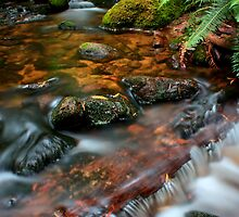 """""""Little Forester River"""" by Husky"""