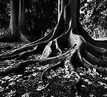 Botanic Park Adelaide by KathyT
