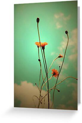 Vintage Weeds by Basia McAuley