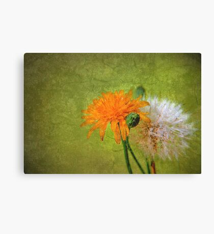 Generations Canvas Print
