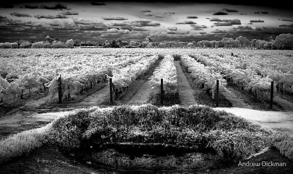 La Piste by Andrew Dickman