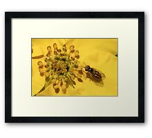 Yellow Flower and Colorful Fly Framed Print