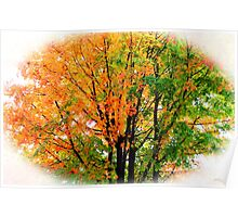 Leaves Changing Colors Poster