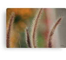 Fountain Grass Canvas Print