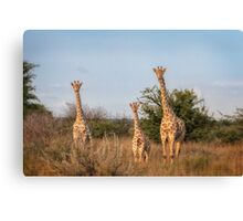 Leaning Towers of Critter Canvas Print