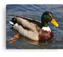 Water of a ducks bill Canvas Print