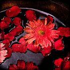 Gerbera & rose petals by Carlos Restrepo