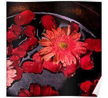 Gerbera & rose petals Poster