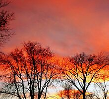 Extravaganza of Color by Larry Trupp