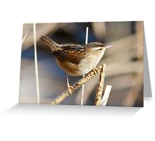 Marsh Wren on the Lookout Greeting Card