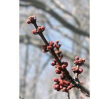 Spring's Awakening Photographic Print