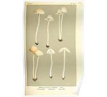 Illustrations of British Fungi by Mordecai Cubitt Cook 1891 V4 0573 AGARICUS  PSILOCYBE  AGRARIUS Poster
