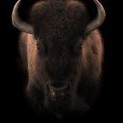 Buffalo by whiterussian
