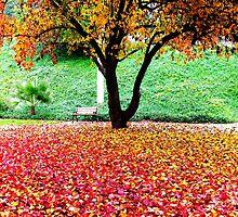 Leaves by stephanielim