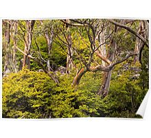 Alpine Gums with Fagus Poster