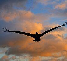 Pelican silhouette, Havana, Cuba by buttonpresser