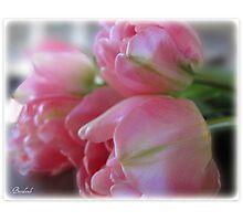 ~ Sweet Dreams ~ Photographic Print