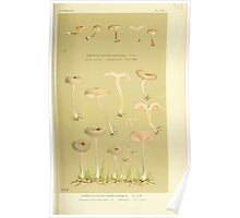 Illustrations of British Fungi by Mordecai Cubitt Cook 1891 V3 0319 AGARICUS  ECCILIA  CARNEO GRISEUS Poster