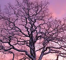 Snowy Sunset Oak Tree, Chelmsford by MichelleRees
