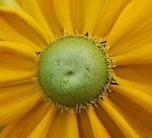 Golden Rays by Celeste Thinks