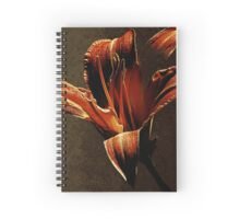 Evening Twinkle Twinkling Spiral Notebook