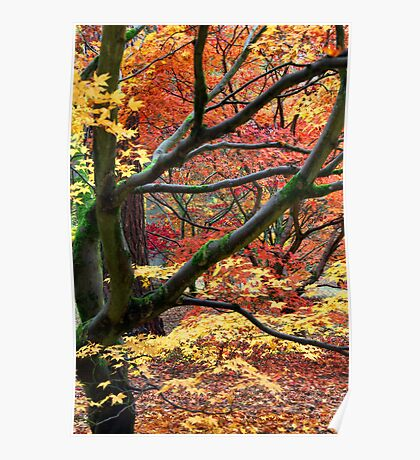 Bright colours of Autumn Poster