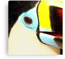 Closeup of a Red-billed Toucan at Iguassu, Brazil.  Canvas Print