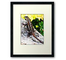 Patient Lizard Framed Print
