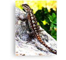 Patient Lizard Canvas Print