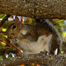 Mrs Squirrel!! by Macky