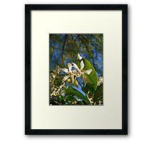Under the Tree Framed Print