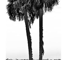 09-107 ~ Cabbage Palms on the St. Johns by djyoriginals